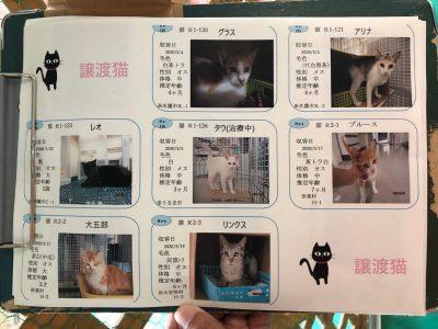 譲渡猫リスト