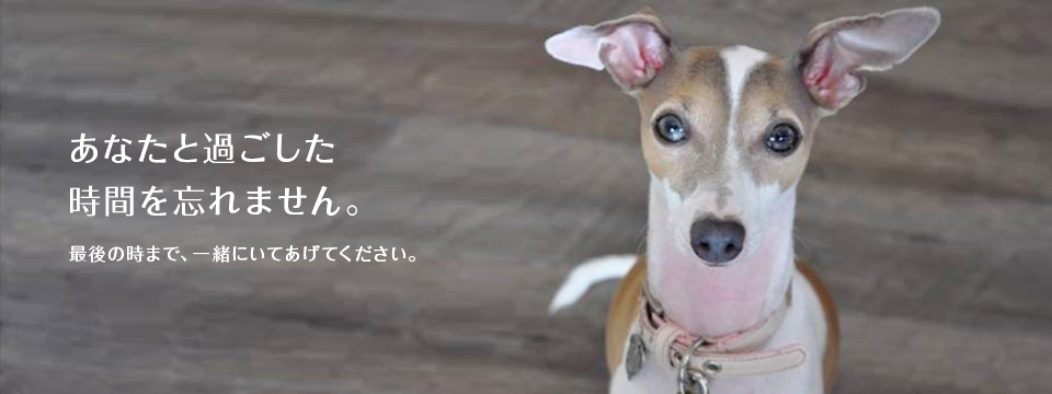 沖縄県動物愛護管理センター譲渡会