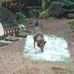 初めての雪?