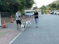 宮古島の犬たちも参加してくれました