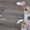 沖縄県動物愛護管理センター|沖縄県内の行方不明や迷い込み保護された犬や猫を掲載